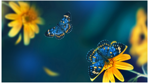 Butterfly Award Picture
