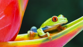Tree Frog Award Picture